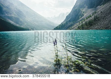 Amazing View To Meditative Ripples On Azure Clear Calm Water Of Mountain Lake. Small Violet Flower O