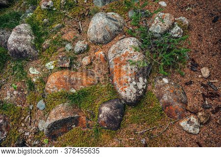 Scenic Forest Background With Conifer Branch And Big Mossy Stones Among Mosses And Lichens. Colorful