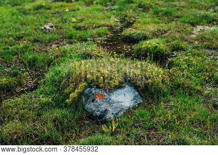 Stone With Orange Lichen Of Heart Shape Among Wild Flora Of Highlands. Scenic Nature Background With