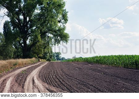 Harvesting Equipment Wheel Marks On Ground Near Corn Field. Corn Field With Blue Sky. Agricultural L