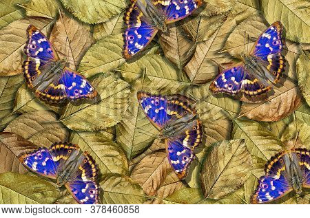 Gold And Blue Natural Background. Bright Colorful Blue Butterflies On Golden Leaves. Golden Fallen L
