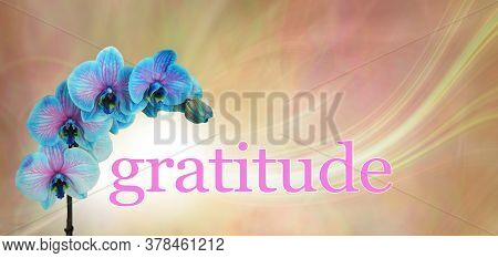 Blue Orchid Floral Gratitude Message  Banner - Blue And Pink Orchid Flower Heads Arcing Over The Wor