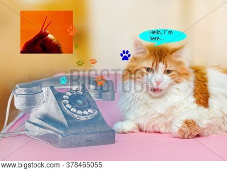 Adult Red Cat With Vintage Phone Thinks About Snail Like Joke
