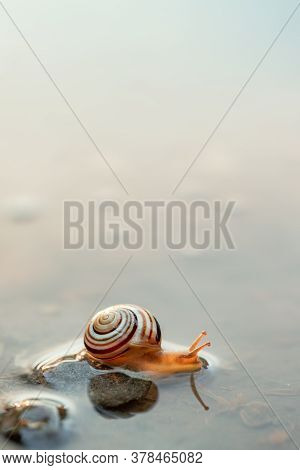 Cute Snails Reflection In The Water. Shell Macro, Close-up Image. Mirrored On Water