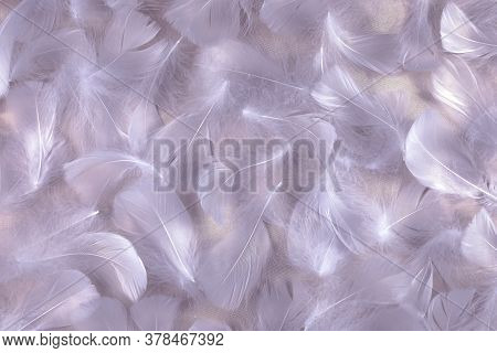 Angelic Lilac Shimmering Silk And Fluffy Feathers Background - Randomly Scattered Short White Curly