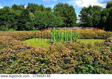 Beautiful Variegated Flowerbed With Japanese Spirea Hedge In A City Park With Tall Trees In The Back