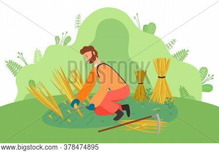Farmer Wearing In Overalls Harvesting Ears Of Wheat On The Field. Agricultural Worker, Autumn Harves