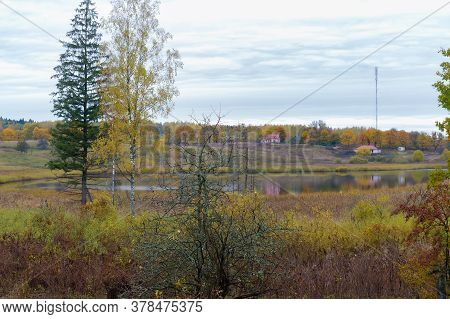 Roadside Trees, Trees On The Edges Of The Highway, Road In Autumn
