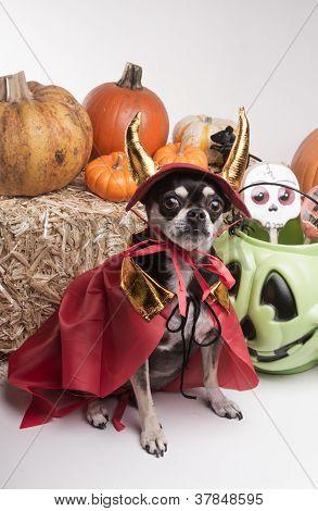 Cute Halloween Devil Dog