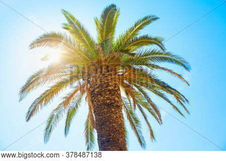 Sunshine Palm Tree. Sun Shining In The Pal Branches