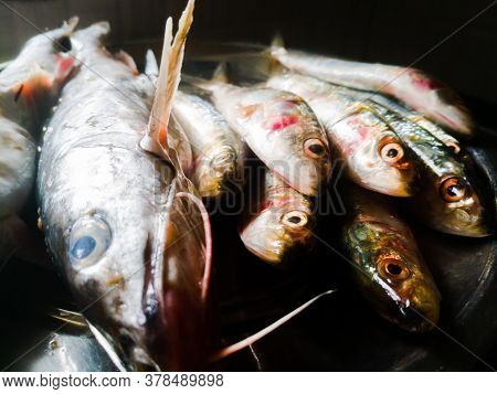 A Closeup Shot Of Sardine And Catfishes In A Plate.fishes Are In Raw Condition And Their Eyes Are Op