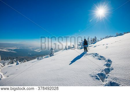 Back View Of A Traveler Photographer Photographing A Snowy Forest Standing In A Snowdrift And In Fog