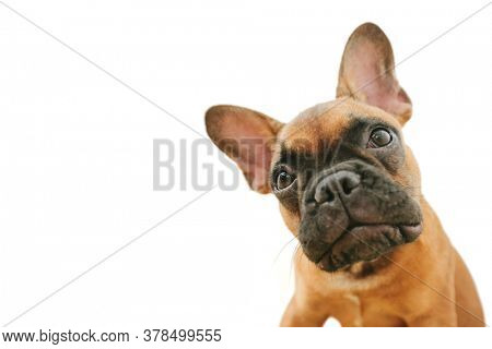 dog on the white backgrounds