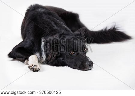 Bored And Upset Puppy Isolated On White With Copy Space. Full Length Portrait Of A Sad And Thoughtfu