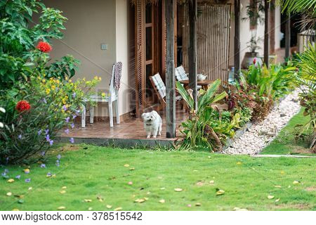 A Shaggy Little Cute Dog Stands At The Entrance To The House, In Front Of The Grass. Concept Of Anim