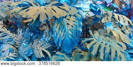 Tropical monstera plants. Nature horizontal background. Saturated Blue, turquoise color.