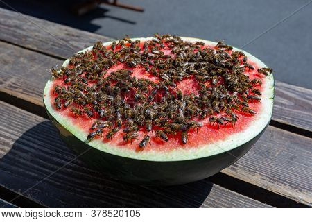 Sweet Watermelon. A Huge Number Of Bees On A Ripe Red Watermelon. Half A Ripe Watermelon Close-up Wi