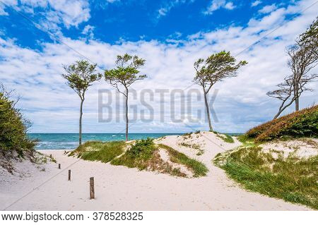 Trees On Shore Of The Baltic Sea.