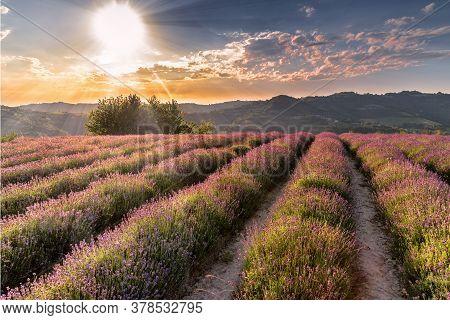 Sunset Over Lavender Field Landscape, Sale San Giovanni, Langhe, Italy
