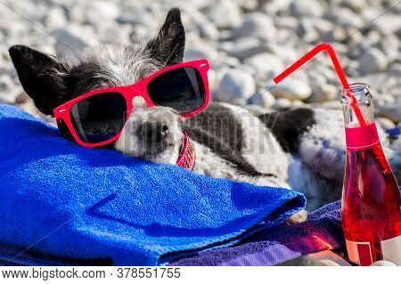 Poodle Dog Resting And Relaxing On A Towel Under Umbrella At The Beach Ocean Shore, On Summer Vacati