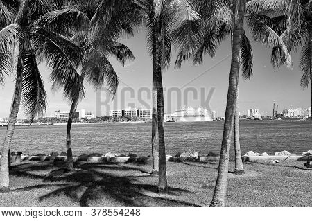 Miami, Usa - February 29, 2016: Sea View Through Palm Trees. Sea Voyage. Cruise Ship In Port. Holida