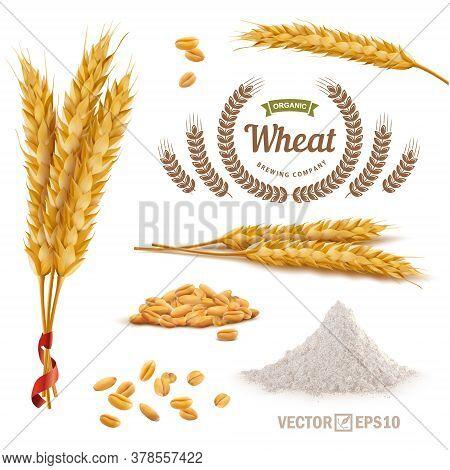 3d Vector Realistic Wheat Set, A Bunch Of Ears, Falling Grains, A Slide Of Flour, Logo For Flour
