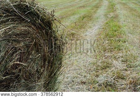 Bale Of Hay On A Beveled Empty Field Close-up With A Copy Space, Hay For Cows, Hay Harvesting, Natur