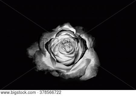 Beautiful Black And White Flower With Black Backgroud