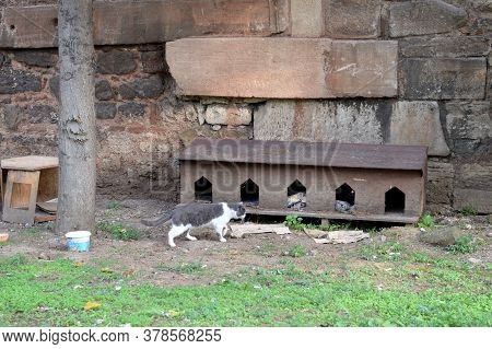Istanbul,turkey - November 4, 2019:hazreti A House For Homeless Cats In The City's Fatih District. I