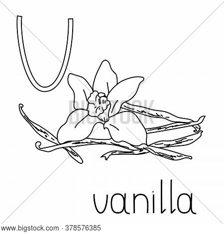 Coloring Page Fruit And Vegetable Abc, Letter V - Vanilla, Educated Coloring Card For Creativity