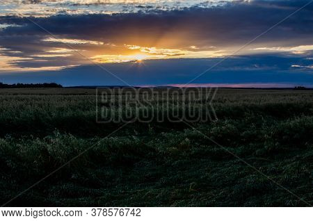 The Sun From Behind The Clouds Illuminates A Field Of Barley. Growing Barley In The Fields