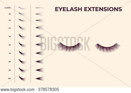 Eyelash Volume Boost Set. Fake Eyelashes Cluster Collection For Extension Process Infographics And G