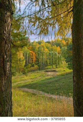 vivid colors autumn landscape. footpath on hill poster