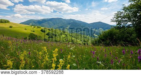 Summer Landscape In Mountains. Amazing Scenery With Wild Herbs In Fields On Rolling Hills Of Carpath