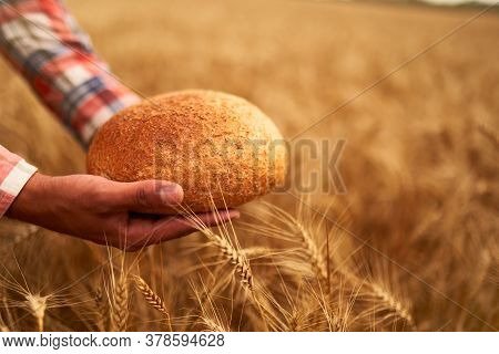 Hands Of Farmer Holding Bran Bread Freshly Baked Of Raw Healthy Flour With Golden Wheat Ears On Back