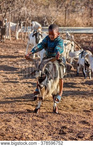 kid riding goat male, small stock typical goat farm in a  village in Africa