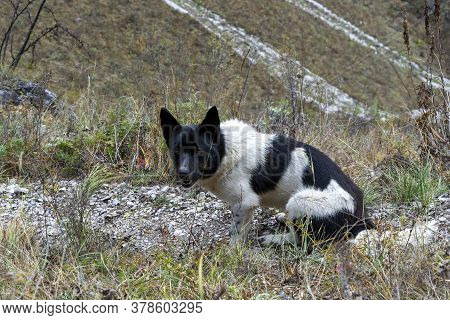 Homeless Dog On The Road. Spotted Dog, Black And White Color. Homeless Animals.