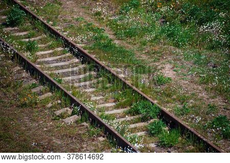 Old railroad tracks in the nature among plants