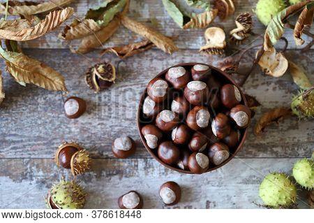 Chestnuts. Buckeyes. Autumn Mood. Leaves Of A Chestnut Tree.