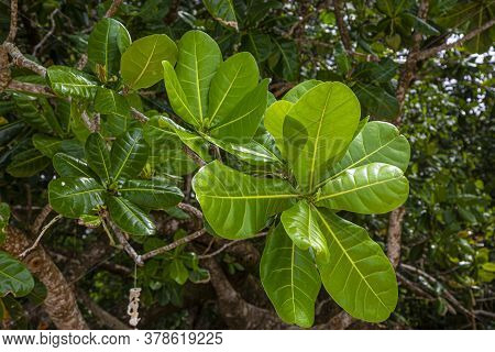 Close Up Picture Of Leafs Of An Tropical Plant In The Rainforest Of Thailand At Daytime