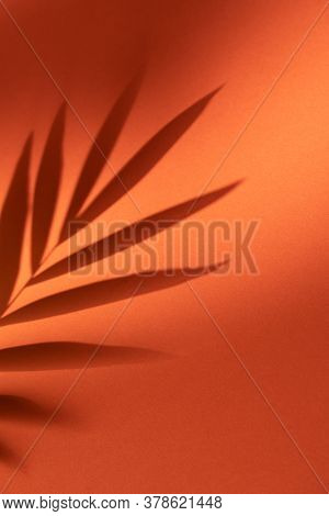 Shadow of tropical plant leaf on orange background. Minimalistic tropical design template.