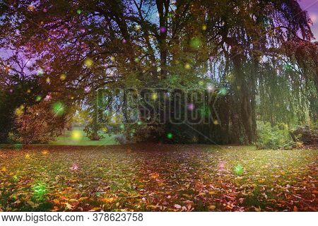 Beautiful Trees Surrounded By Spiritual Light Orbs - Multicoloured Fairy Like Light Spheres Floating
