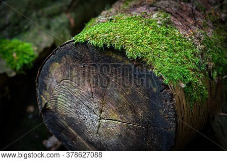 A Log In Soderasen National Park, Scania In Southern Sweden. Bright Green Moss. Woodland Photography
