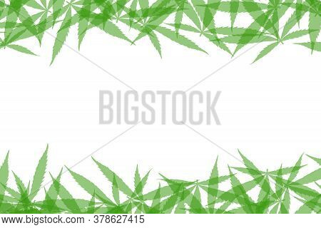 Frame Formed With Hemp Leaves Isolated On White Background. Green Cannabis Leaves Background. Drug M