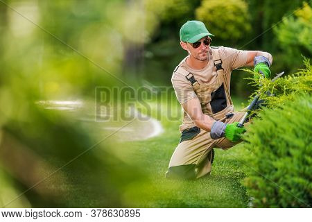 Caucasian Garden Worker In His 40s Trimming Decorative Garden Plants Using Professional Cutting Tool