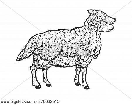 Sheep In Wolf Clothing Sketch Engraving Vector Illustration. T-shirt Apparel Print Design. Scratch B