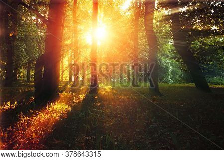 Autumn forest landscape -autumn  forest trees with grass on the foreground and sunlight shining through the autumn forest trees, colorful autumn forest nature