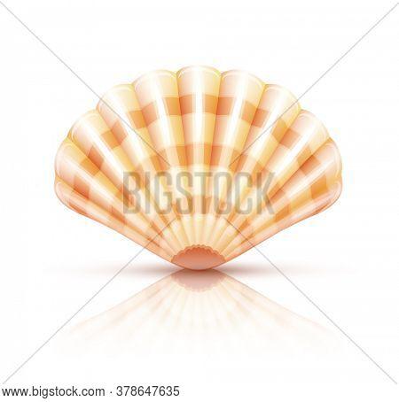 Shellfish seashell. Isolated on white background. 3D illustration.