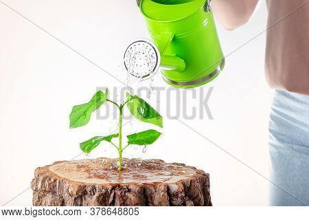 Woman Holding Watering Can Watering Green Plant, Business Concept. New Life Growing. Eco.