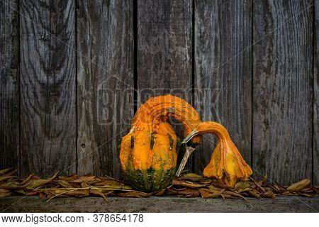 Portrait Of Two Orange, Bird Shaped Gourds With Long Necks And Beaks, In Affectionate Posture, Again